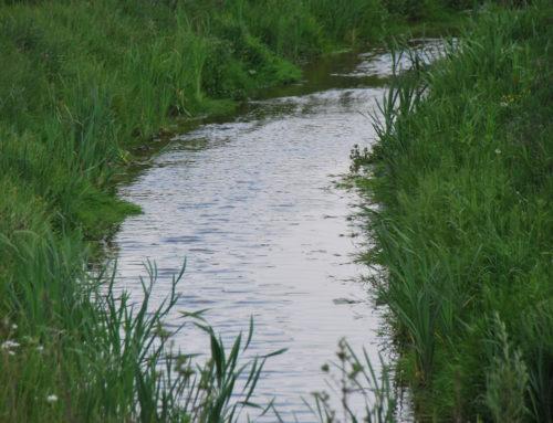 Mittagspause am Wasser: Renaturierung des Katernberger Bachs gestartet